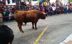 as-naci-el-toro-del-aleluya